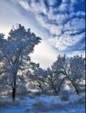 Hoar-frost tree set Royalty Free Stock Image