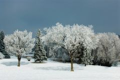Hoar frost on trees Royalty Free Stock Photos
