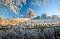 Hoar frost on trees Royalty Free Stock Image