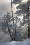 Hoar frost trees. Taken at secord rd it was -35c Stock Image