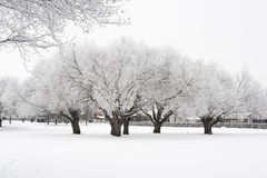 Hoar frost trees. Photo of trees in the winter with hoar frost Royalty Free Stock Photo