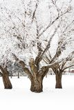 Hoar frost trees. Photo of trees in the winter with hoar frost Royalty Free Stock Photos