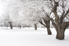 Hoar frost trees. Photo of trees in the winter with hoar frost Royalty Free Stock Image