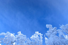 Hoar-frost on trees in winter Stock Photo