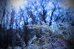 Hoar frost on winter day at Sandy Creek Nature Center Park. Chilly frosty grasses at sunrise at Sandy Creek Nature Center in Athens, Clarke County, Georgia, USA stock photos