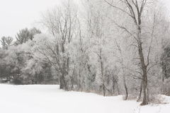 Hoar Frost on a Winters Day Royalty Free Stock Images