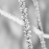 Hoar Frost on a Wire Fence stock photography