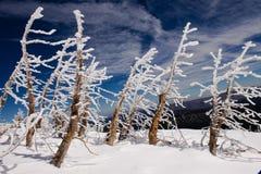 Hoar frosted drzewa Zdjęcia Royalty Free