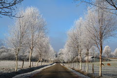 Hoar Frosty road Royalty Free Stock Images