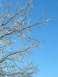 Hoar-frosty trees and sky Stock Photos