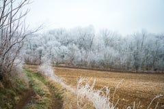 Hoar na gałąź drzewa w lesie Fotografia Stock