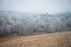 Hoar na gałąź drzewa w lesie Obrazy Royalty Free
