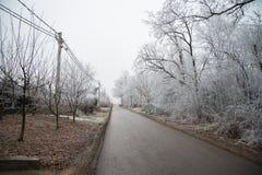 Hoar på filialerna av träd i skogen Royaltyfri Fotografi