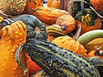 A Hoard of Gourds!. The fall season begins at Brunner`s Farm Market in Alliance, Ohio with boxes of colorful gourds stock photo
