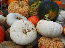 A Hoard of Gourds!. The fall season begins at Brunner`s Farm Market in Alliance, Ohio with boxes of colorful gourds and pumpkins royalty free stock photo