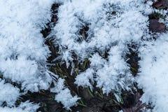 Hoarfrost σε ένα έδαφος Στοκ Εικόνες