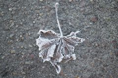 Hoarfrost σε ένα φύλλο στα ξημερώματα σε έναν κρύο δρόμο Στοκ Φωτογραφίες