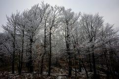 Hoarfrost στα δέντρα Στοκ Εικόνες