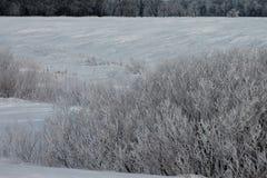 Hoarfrost στους θάμνους κοντά στον τομέα Στοκ φωτογραφία με δικαίωμα ελεύθερης χρήσης