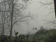 Hoarfrost στους θάμνους στην ομίχλη, με τον ήλιο στον ορίζοντα φιλμ μικρού μήκους
