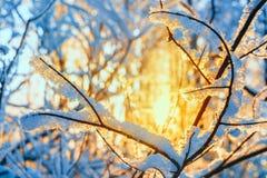 Hoarfrost στους κλάδους των δέντρων στις ακτίνες Στοκ Φωτογραφίες