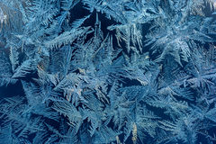 Hoarfrost το χειμώνα Στοκ εικόνες με δικαίωμα ελεύθερης χρήσης