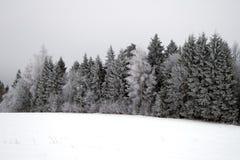 hoarfrost χειμώνας δέντρων Στοκ Εικόνες