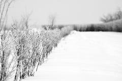 hoarfrost изгороди Стоковые Фото