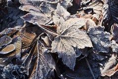 Hoarfrost на листьях стоковые изображения
