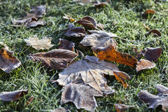 Hoarfrost на листьях стоковые фото