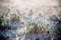 hoarfrost травы стоковая фотография