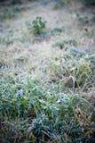 hoarfrost травы стоковая фотография rf