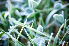 hoarfrost травы стоковые изображения