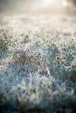 hoarfrost травы стоковое изображение