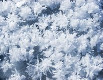 Hoarfrost Royalty Free Stock Images