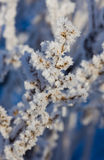 Hoarfrost Stock Photography