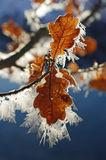 Hoarfrost #2 Royalty Free Stock Images
