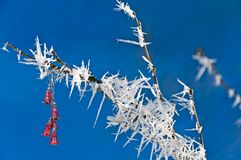 Hoarfrost Royalty Free Stock Image