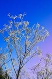 Hoarfrost Royalty Free Stock Photo