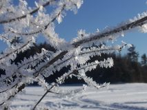 Hoarfrost. Ice crystals on icefishing twigs Royalty Free Stock Photography
