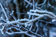 hoarfrost photos stock