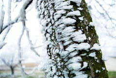 hoarfrost photo stock