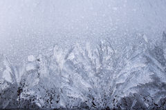Hoarfrost Stock Images