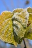 hoarfrost stock foto's