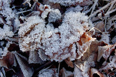 hoarfrost photographie stock