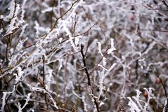 Hoarfrost Stock Photos