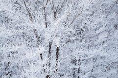 Hoarfrost auf Bäumen stockfoto