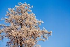 Hoarfrost auf einem Baum branche stockfotografie
