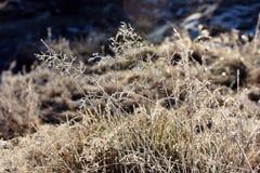Hoarfrost auf Gras Lizenzfreies Stockfoto