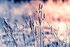 Hoarfrost auf trockenem Gras E Trockenes Gras bedeckt mit zerbrechlichem Reif und stockbilder